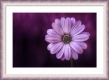 Moldura lilás e branca de 4 cm-1021-3