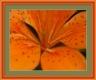 Moldura cerejeira/laranja de 3 cm-277-4