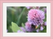 Moldura Rosa de 3cm-CMQ07-4