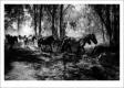 PEDRO ESTEVES - WILD HORSES-F100047_MPR45x30-2