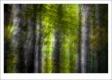 RUI DAVID - FLORESTA-F1000715_MPR60X40-2