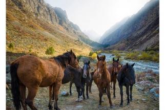SERGE HORTA - WILD HORSES OF KYRGYZSTAN